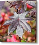 Canadian Leaf Metal Print