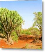 candelabra euphorbia tree Euphorbia candelabrum, Kenya Metal Print
