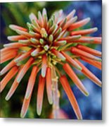 Candelobra Aloe In San Diego Metal Print