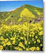 Candle Light In The Temblors - Superbloom 2017  Metal Print