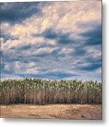 Cane Thicket Metal Print