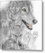 Canis Lupus V The Grey Wolf Of The Americas - The Recovery  Metal Print