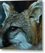 Canis Species Metal Print