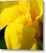 Canna At Sunrise Metal Print