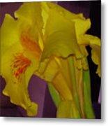 Canna Flower Metal Print