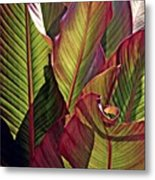 Canna Leaves 2   Metal Print