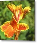 Canna Lily Metal Print by Kenneth Albin