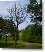 Cannon Valley Trail Metal Print