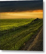 Canola And The Road Ahead Metal Print