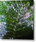 Canopy Of Ferns Metal Print