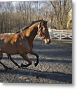 Canter Metal Print