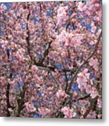 Canvas Of Pink Blossoms Metal Print
