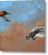 Canvasbacks Metal Print