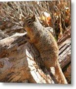 Canyon Squirrel Metal Print