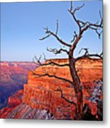 Canyon Tree Metal Print