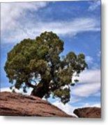 Canyonlands Tree Metal Print