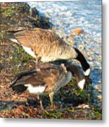 Cape Cod Beachcombers 2 Metal Print