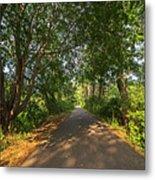 Cape Cod Rail Trail Trees Eastham Ma Metal Print