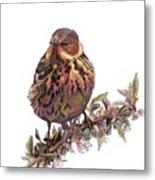 Cape May Warbler Metal Print