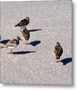 Captiva Birds 2 Metal Print