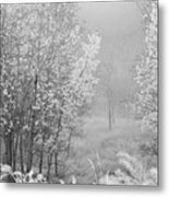 Capture Me Misty Metal Print