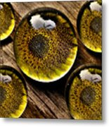 Captured Under Glass Series Group Two Metal Print