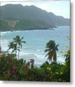 Carambola Photograph Virgin Islands Metal Print
