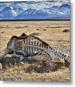 Carcass With A View Metal Print