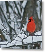 Cardinal And Snow Metal Print