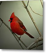 Cardinal And The Setting Sun Metal Print