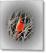 Cardinal Centered Metal Print