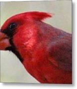 Cardinal Closeup D-bn2 Metal Print