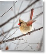 Cardinal Facing A Brisk Wind Metal Print