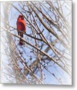 Cardinal I Metal Print