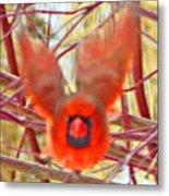 Cardinal In Flight Abstract Metal Print