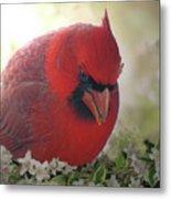 Cardinal In Flowers Metal Print
