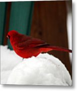Cardinal In Snow II Metal Print