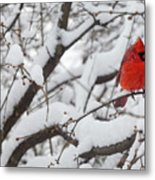 Cardinal In The Snow 3 Metal Print
