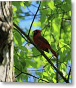 Cardinal In The Springtime Metal Print
