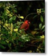 Cardinal In The Trees Metal Print