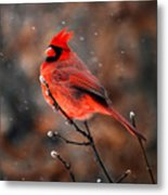 Cardinal On A Snowy Day Metal Print