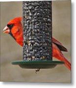Cardinal On Feeder Metal Print