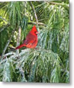 Cardinal On Ice Metal Print