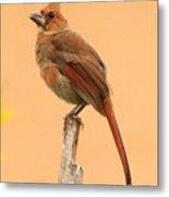Cardinal Portrait Metal Print