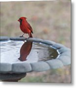 Cardinal Reflection Metal Print