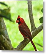 Cardinal Render Metal Print