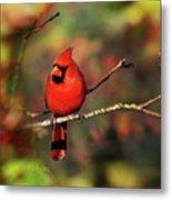 Cardinal Territory Metal Print
