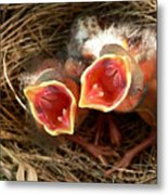 Cardinal Twins - Open Wide Metal Print