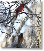 Cardinals In Mossy Tree Metal Print