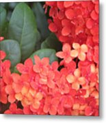 Caribbean Beauty Metal Print